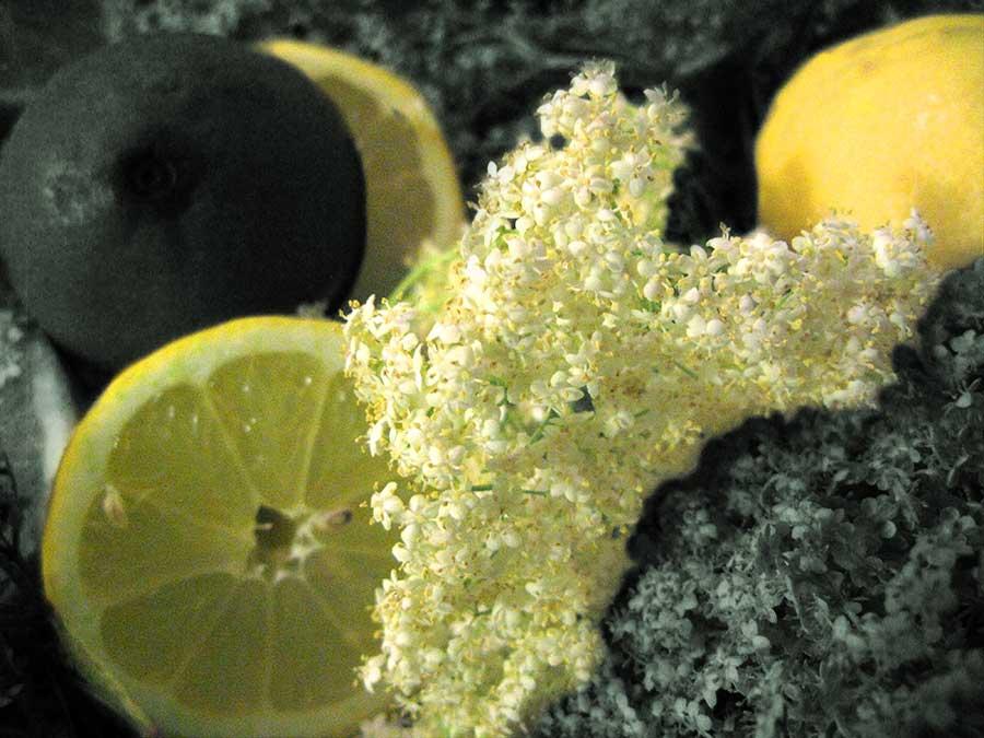 Zitronen geben dem Holunder-Sirup eine frische Note