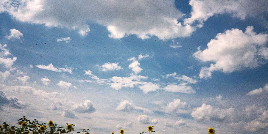 Sonneblumenvorbeifahrt