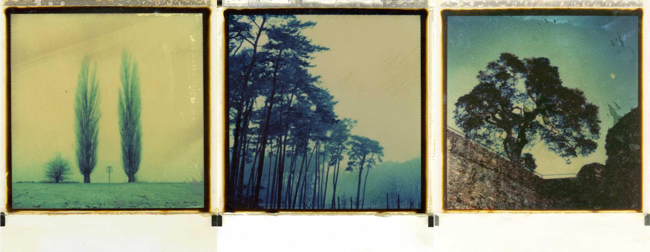 SX-70 Bäume in Südhessen