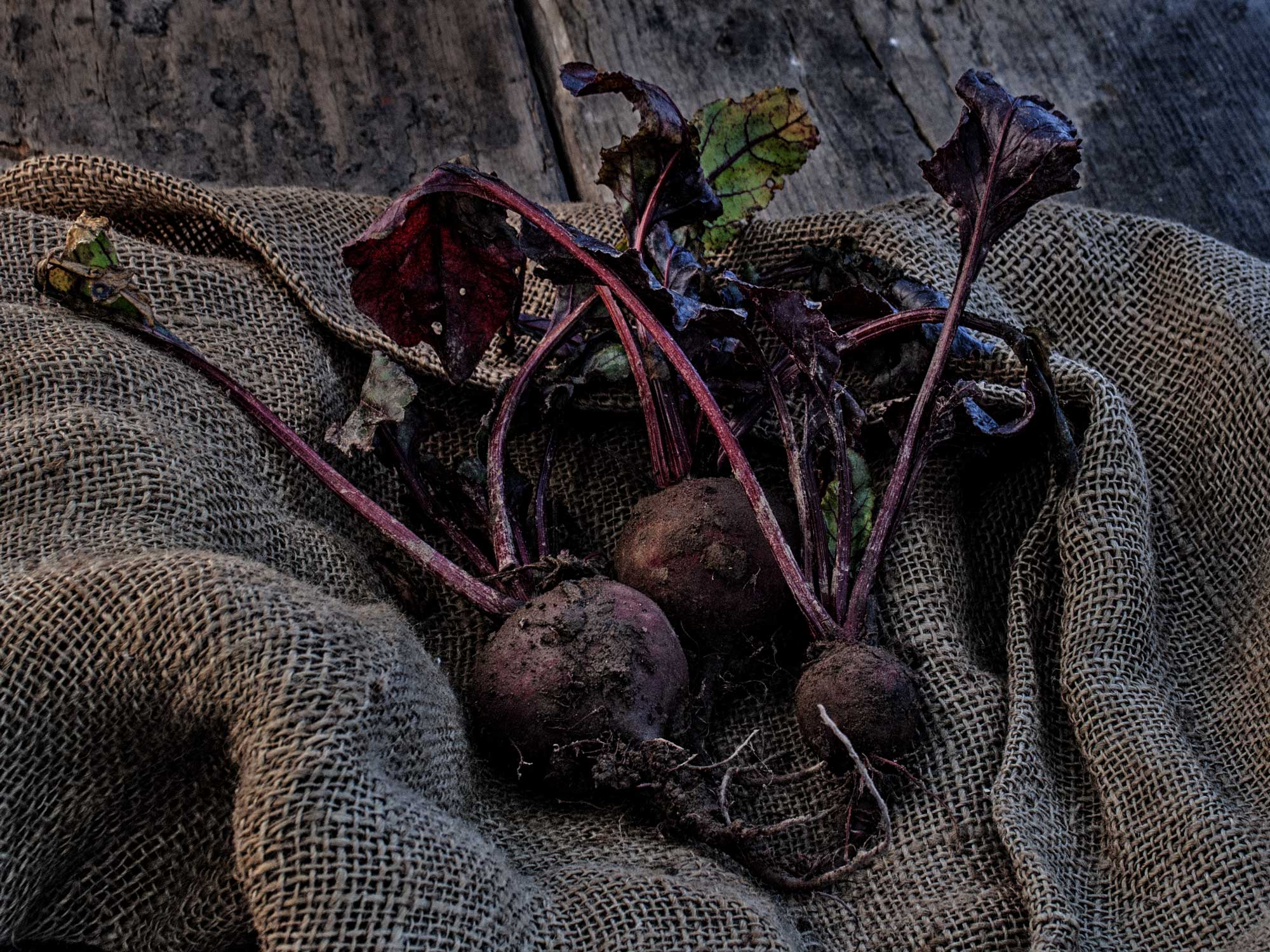 Die Rote Beete für Rote Beete Carpaccio mit Grünkohl-Chips und Meerrettich-Gremolata