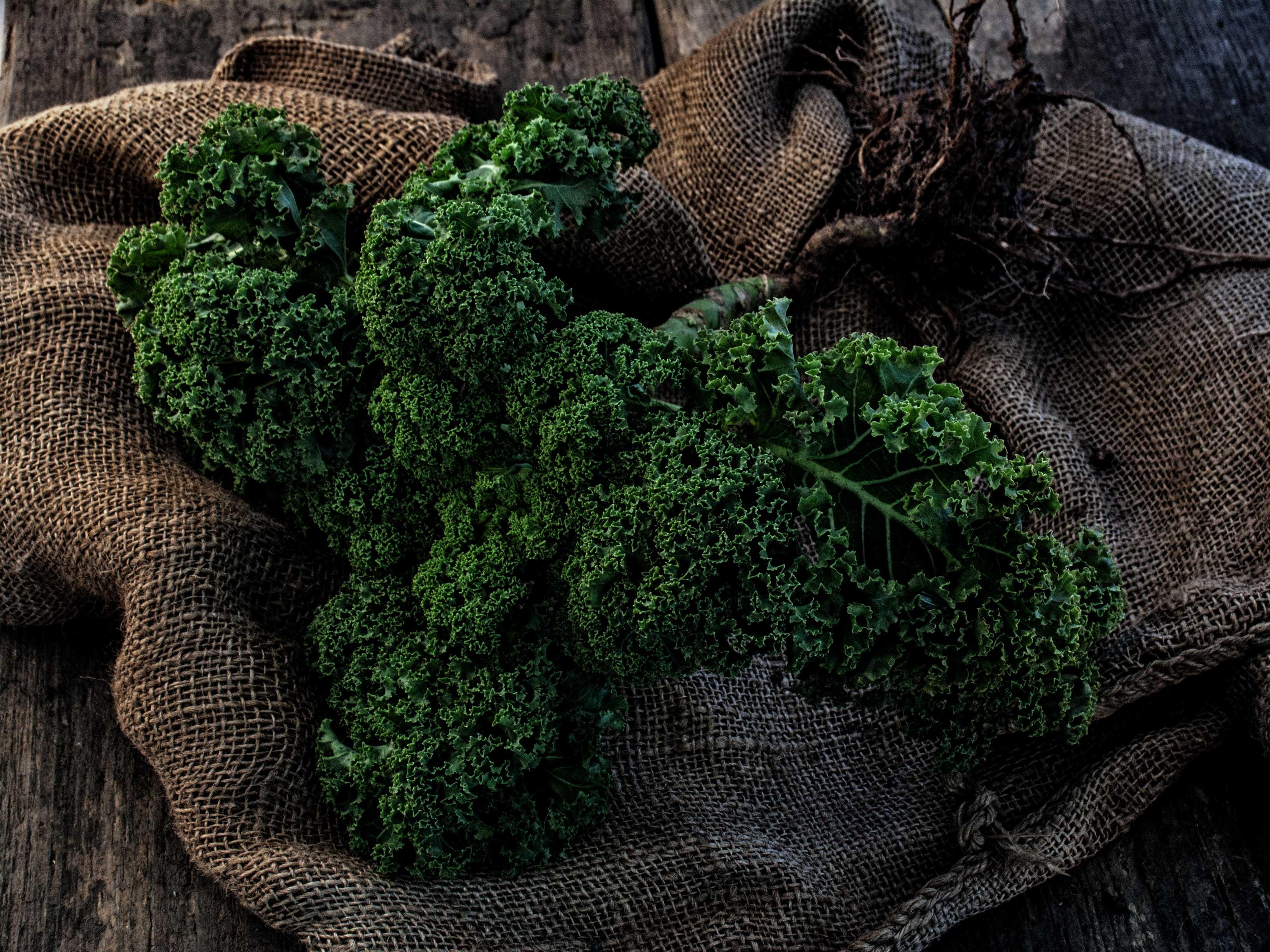 Der Grünkohl für Rote Beete Carpaccio mit Grünkohl-Chips und Meerrettich-Gremolata