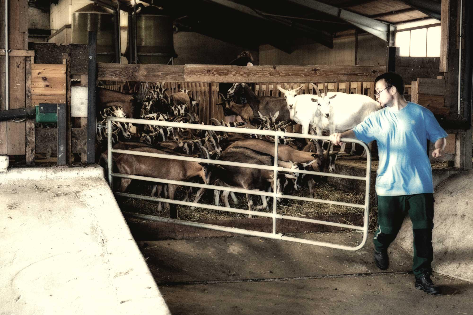 Weiße Hube, ökologische und soziale Landwirtschaft, Bioziegenkäse, Ziegenkäse