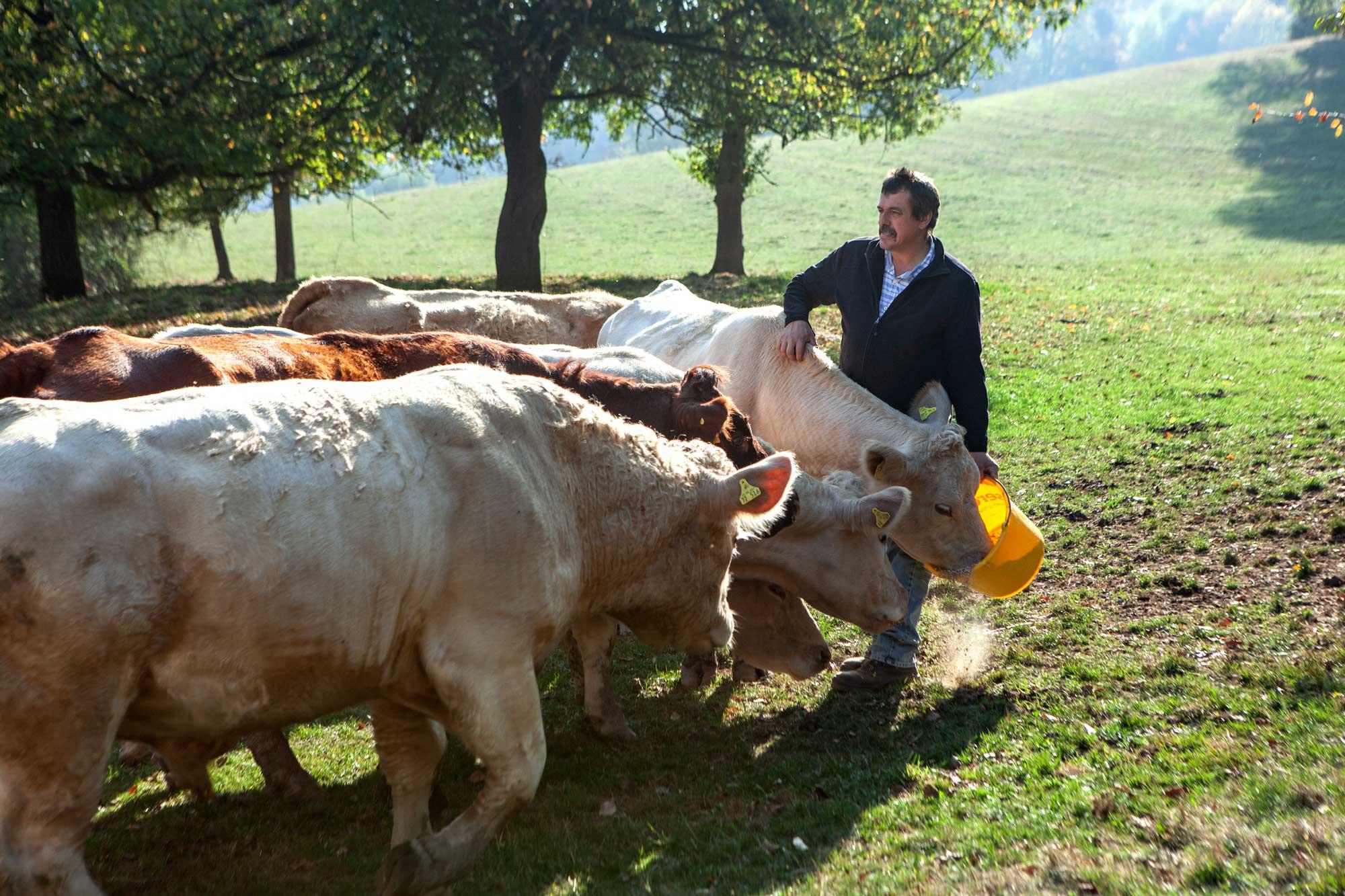 Landwirtschaft im Odenwald