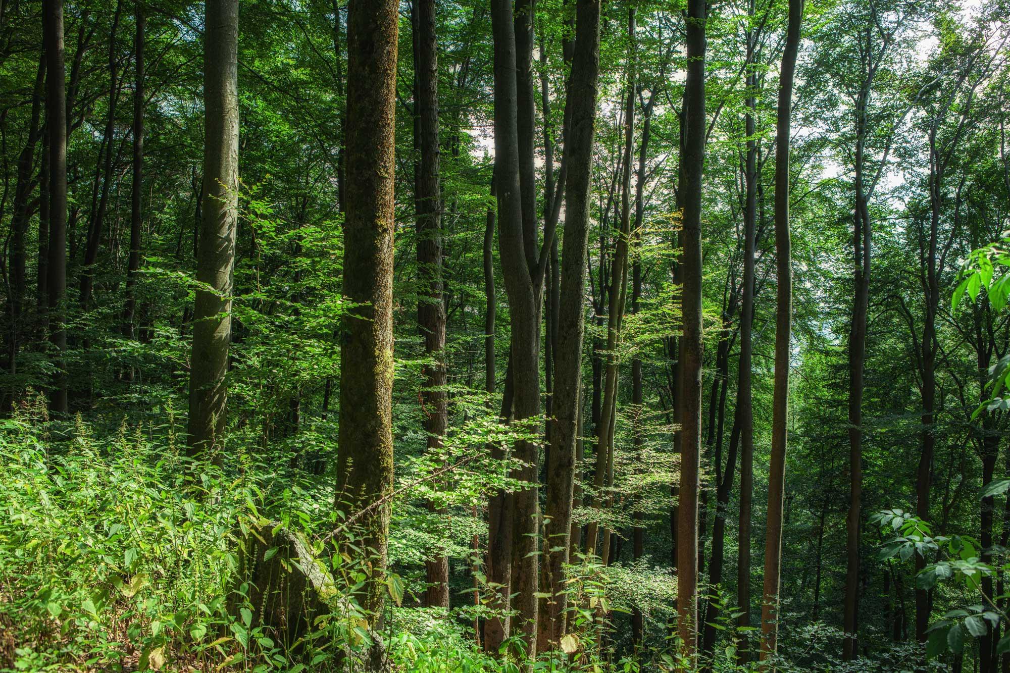 Am Wildweibchenstein bei Laudenau im Odenwald