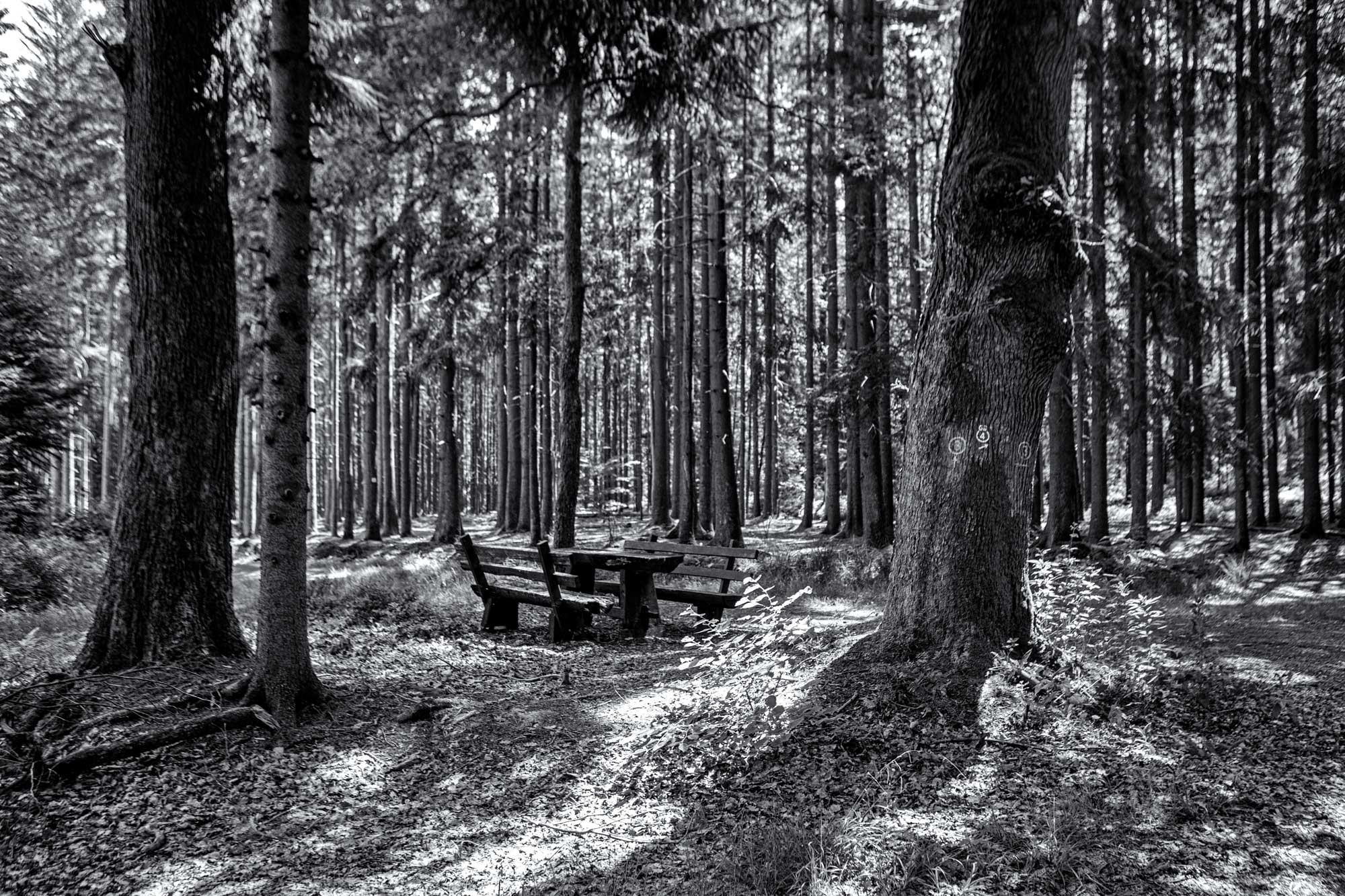 Im sommerlichen Wald zwischen Olfen und Güttersbach im Odenwald