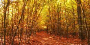 Odenwald im Herbst, Rodensteiner Burgwald