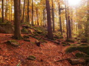 Odenwald im Herbst
