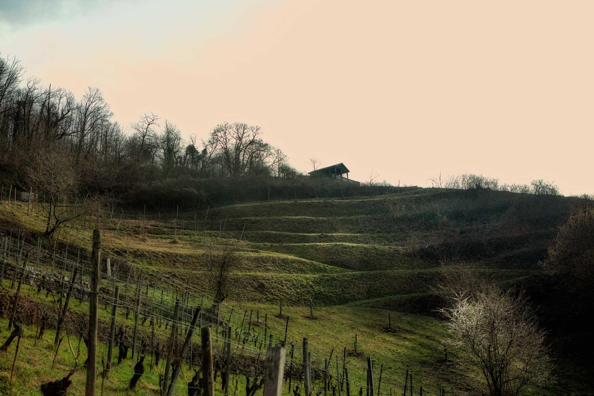 Feligreno, Alte Burg, Zwingenberg