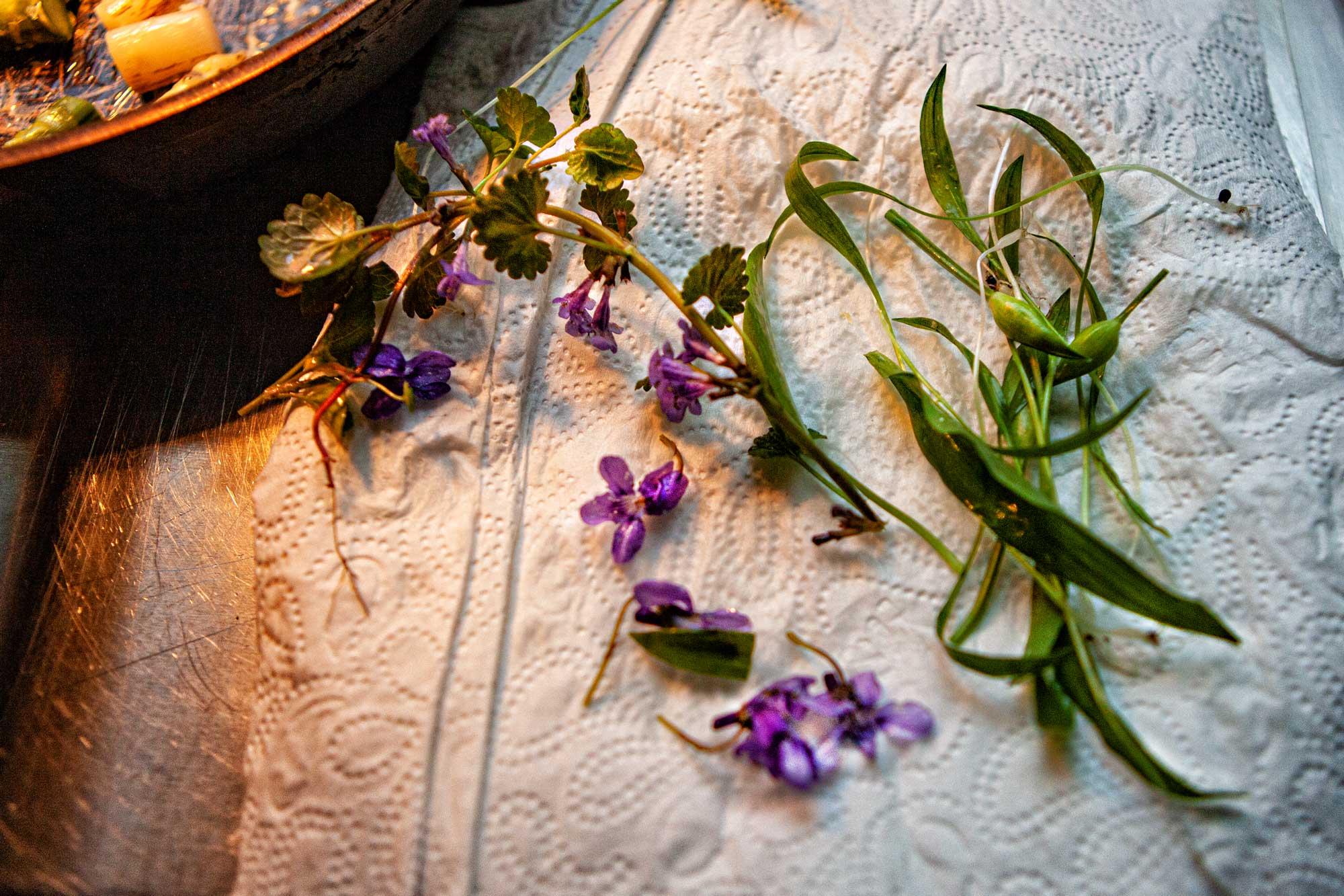 Wildkräuter für den Bergsträßer Frühling in Kaltwassers Wohnzimmer